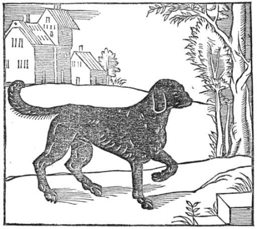 St. Hubert's Dog - Precursor to Labrador Retriever